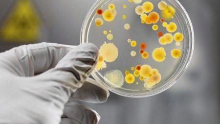 колонии бактерий в чашке петри