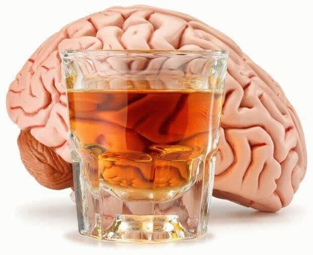 Модель головного мозга и стакан с жидкостью