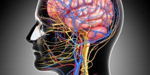 Как укрепить сосуды головы: лекарства, народные средства и упражнения